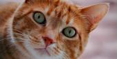 Curious Cat, a rede social de perguntas e confissões