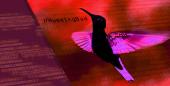 Hummingbad: virus chino, solución latina